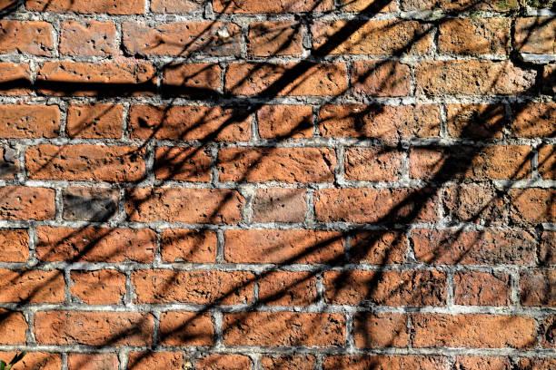 roten backsteinmauer mit baum ast schatten im garten - steine für gartenmauer stock-fotos und bilder