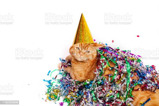 Red british cat in a birthday hat lying in confetti on white picture id1162003556?b=1&k=6&m=1162003556&s=612x612&h=qhg2caucph6msm6vo5zxhdhpw7xfn6um nusby3mngo=