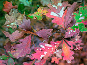 Autumn landscape with colorful foliage in the forest on Cape Cod