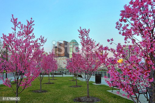 1024248138istockphoto Red buds blooming downtown dusk 515789620