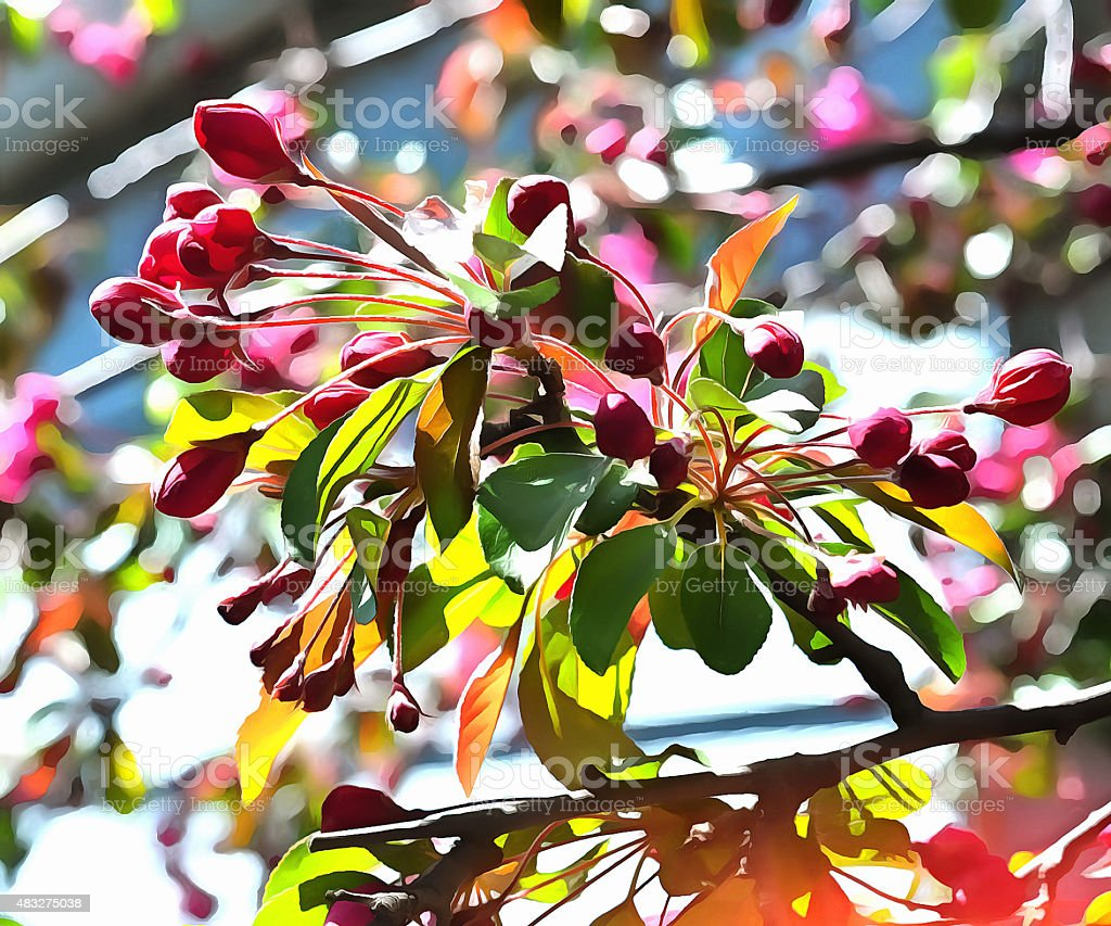 Red Buds in the Spring stock photo