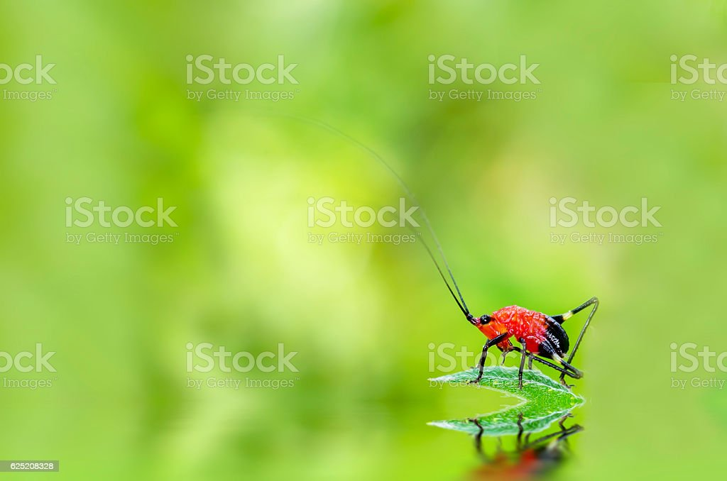 Red bug on a green leaf stock photo