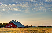 Red barn at sunset with a field of grain in front of it.