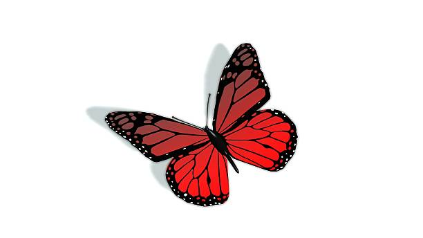 red butterfly isolated on white – Foto