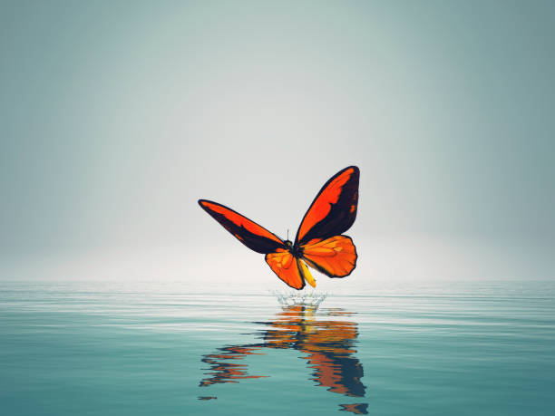 Red butterfly on sea this is a 3d render illustration picture id1083724498?b=1&k=6&m=1083724498&s=612x612&w=0&h=mmcq5b3w85wfp h2hdzhsmnaiyzfghhnovvvspvnqp4=