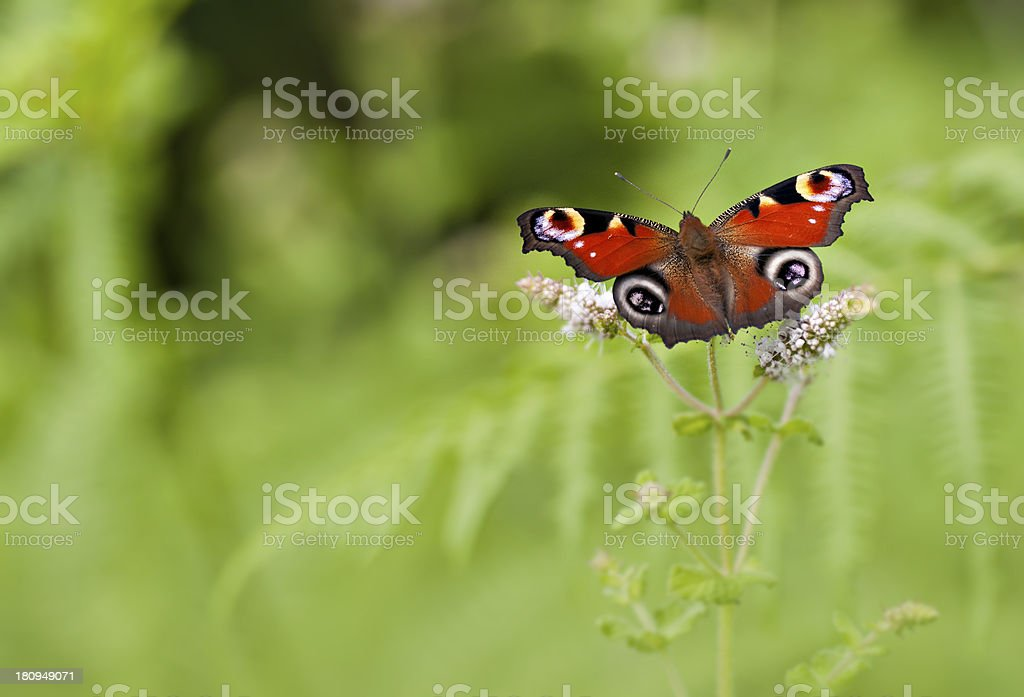 Red butterfly royalty-free stock photo