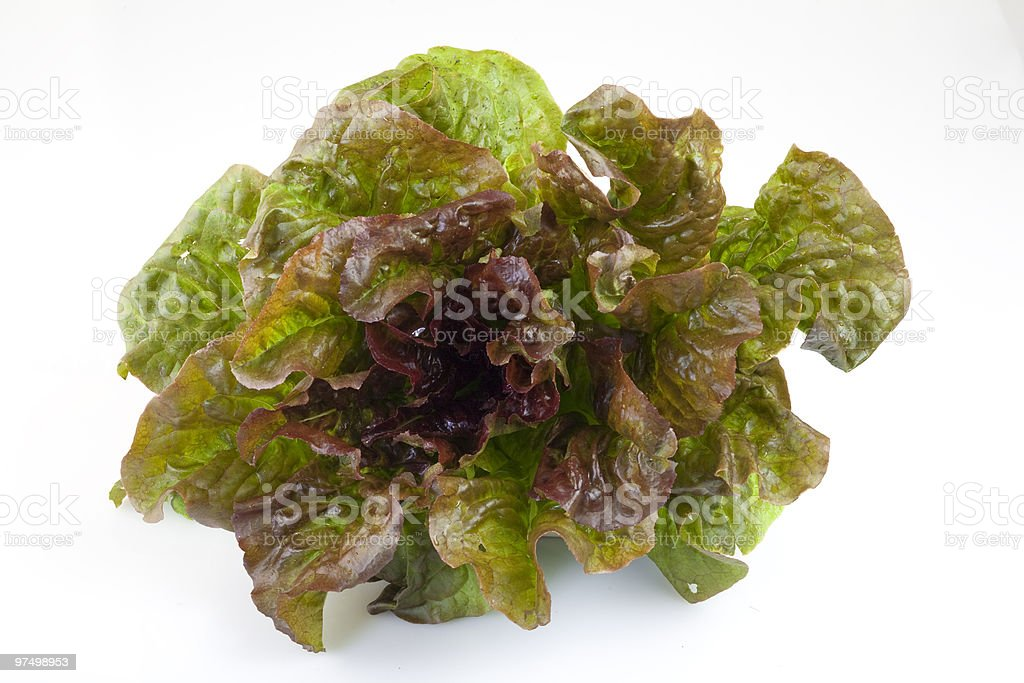 Red butterhead lettuce royalty-free stock photo