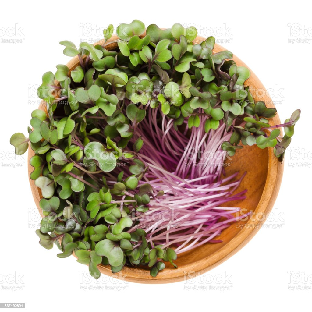 Red cabbage sprouts in wooden bowl over white stock photo