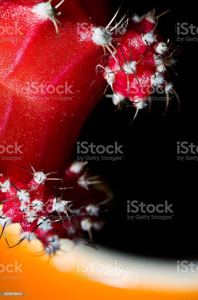 Red Cactus stock photo
