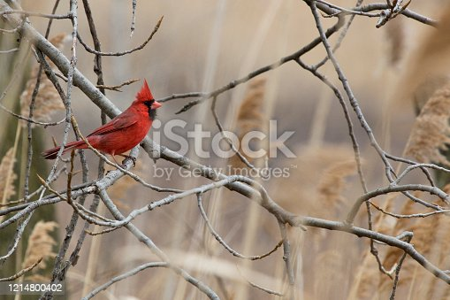 Songbird in wild in natural environment.