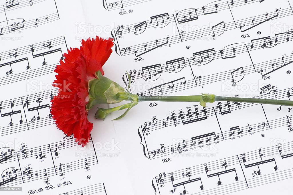 Red carnation flower on musical notes page royalty-free stock photo