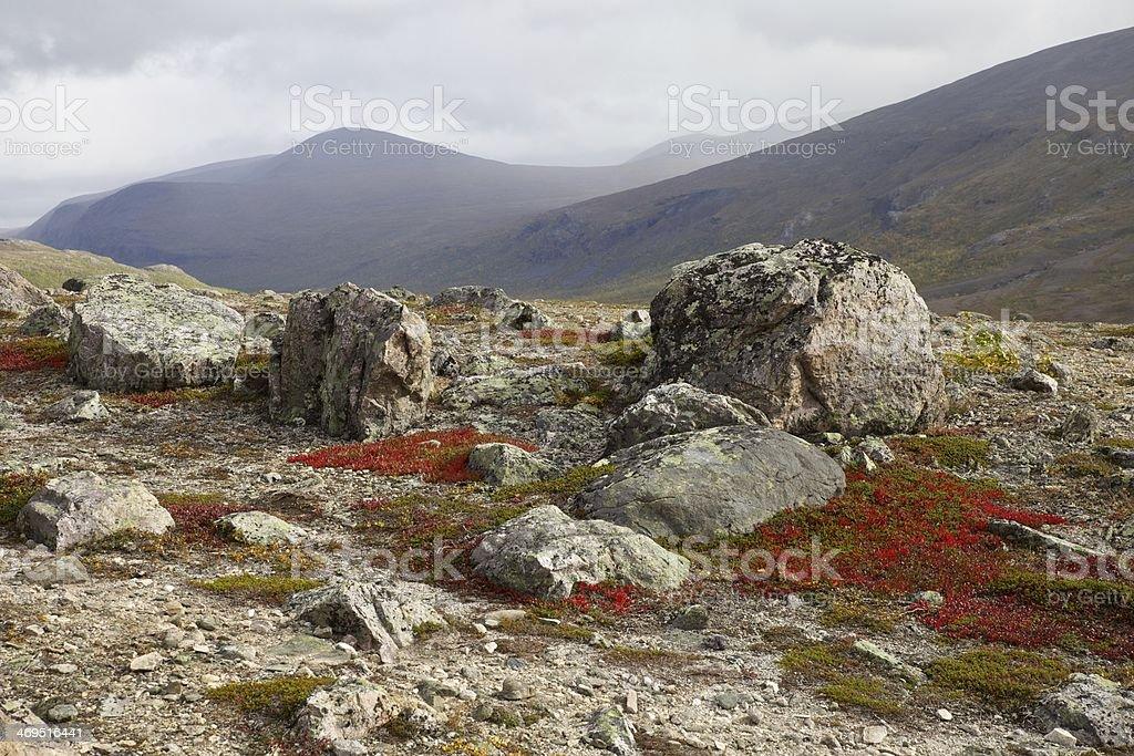 Red carpet of vegetation - Kebnekaise, Sweden stock photo