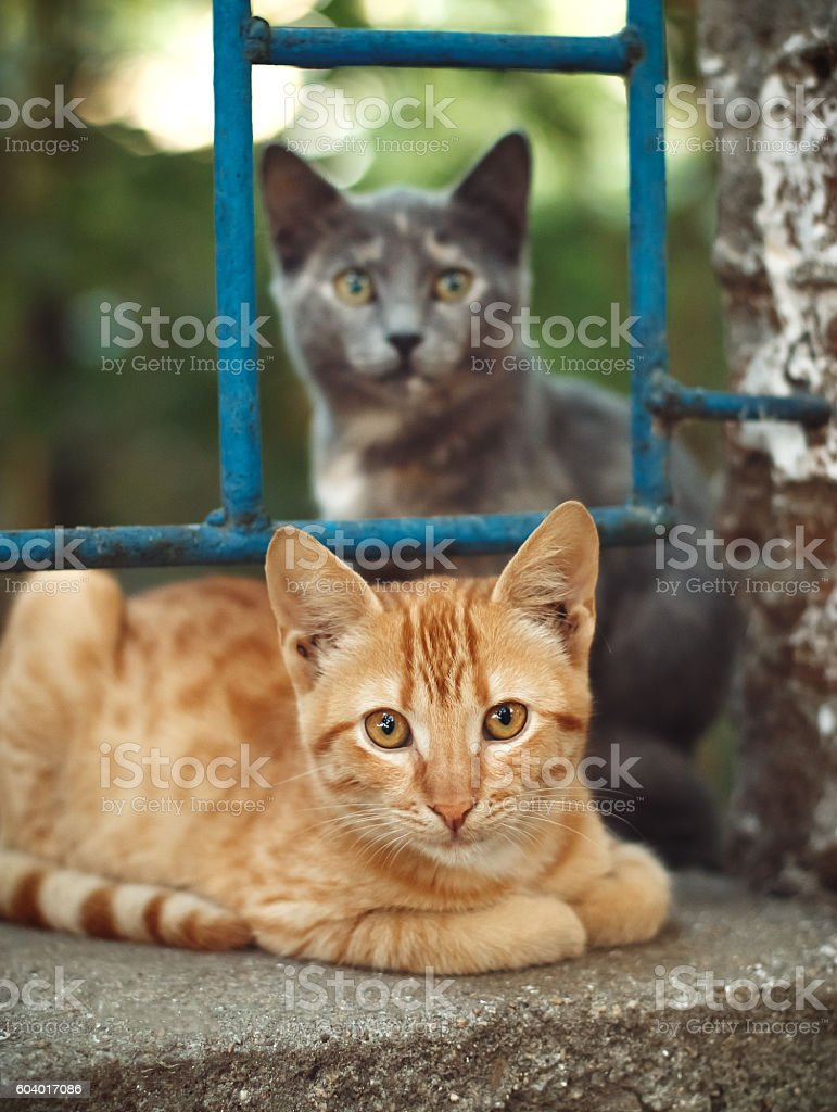 Red cat and curious cat