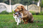 istock Red cat and dog walk on the lawn. Friendship of pets in the park. Animals in nature. Stock photo background 1253462195