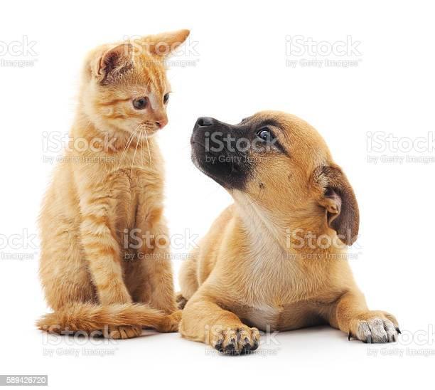 Red cat and puppy picture id589426720?b=1&k=6&m=589426720&s=612x612&h=acoh6e6ku xjzm8rc5nayecjfawc uzpdhp6mj0so4c=