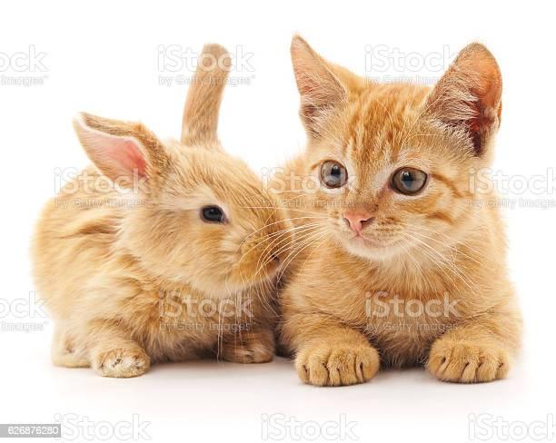 Red cat and rabbit picture id626876280?b=1&k=6&m=626876280&s=612x612&h=yb3atjfdooet tnyodkdqh9xq8ma11a90no4l3g5f40=