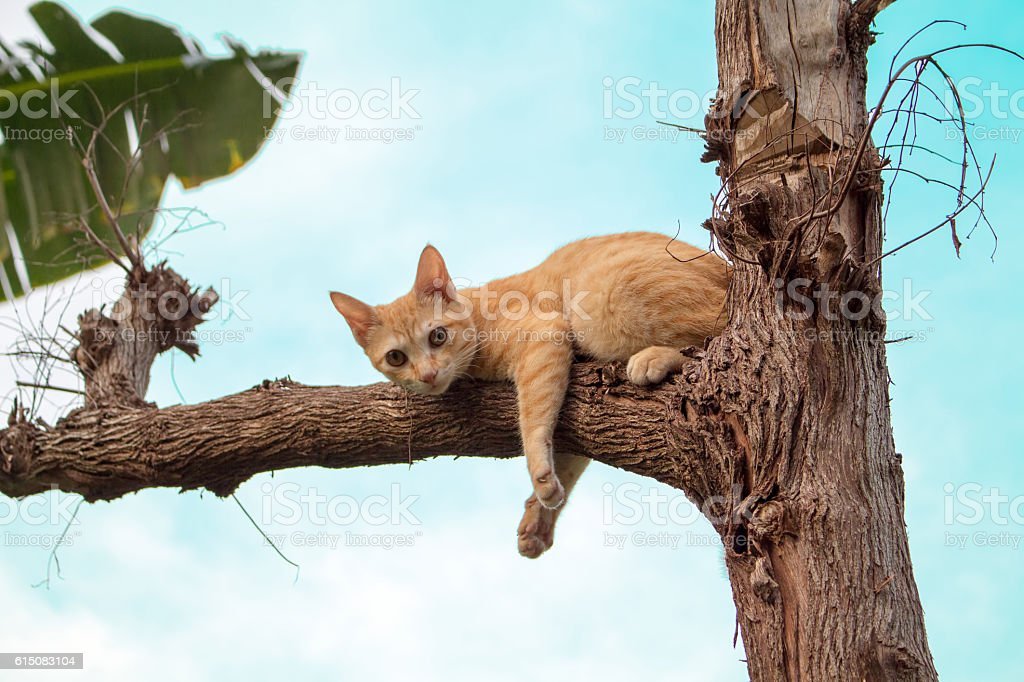 Red cat climbed on old tree stock photo