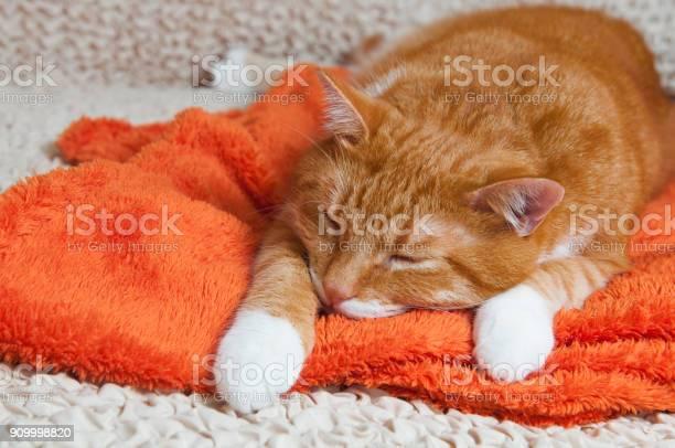 Red cat fell ill picture id909998820?b=1&k=6&m=909998820&s=612x612&h=8uny7izybcrqpkct1pyveavrx5apeqof4 lm82smi3a=