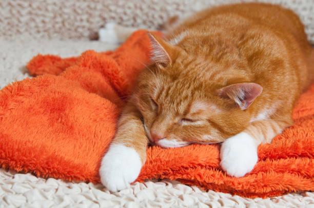 red cat fell ill stock photo