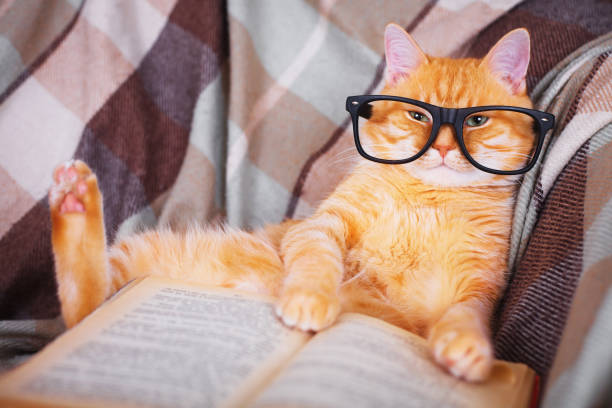 Red cat in glasses lying on sofa with book Cute red cat in glasses lying on sofa with book information equipment stock pictures, royalty-free photos & images