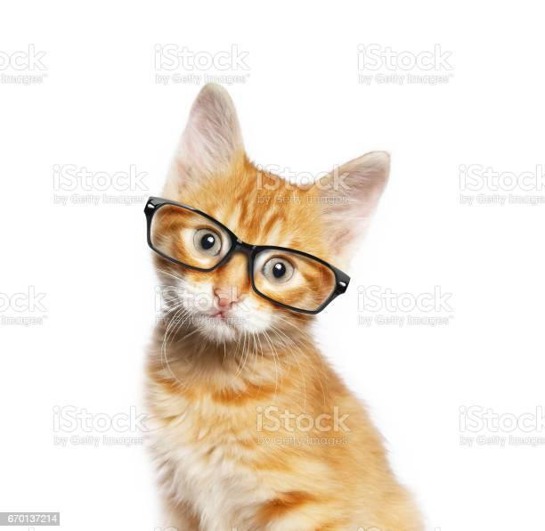 Red cat in glasses picture id670137214?b=1&k=6&m=670137214&s=612x612&h=tiuq0byyg u5v96h8gfzjht0lt2 x4payw1auupo82i=