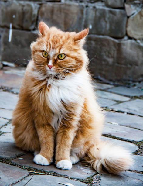 Cтоковое фото Red cat in Krutitsi