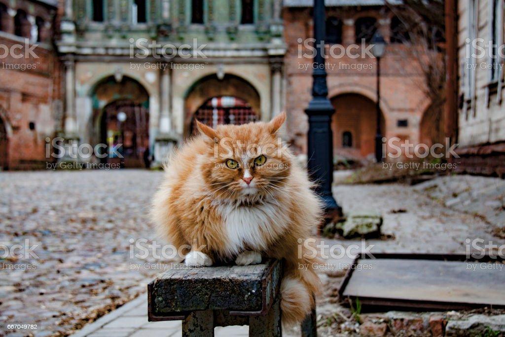 Red cat in Krutitsy stock photo
