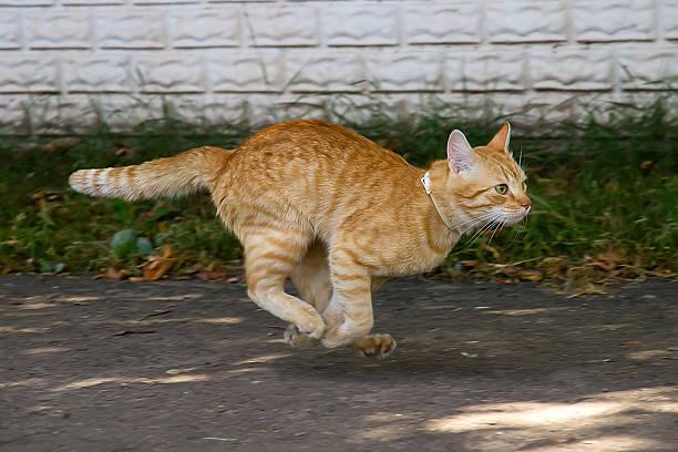 Red cat in the jump picture id471875471?b=1&k=6&m=471875471&s=612x612&w=0&h=rwb08d6m5cppossx8z94wkz89gv3gu9llqn636fg5ca=