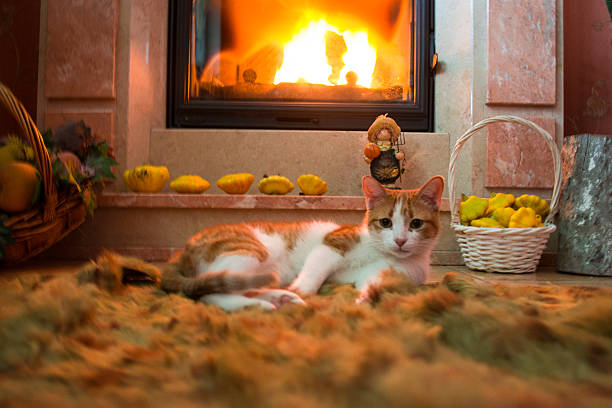 Red cat is basking by the fireplace in the cozy room picture id618840888?b=1&k=6&m=618840888&s=612x612&w=0&h=ywcn0hveyjiw3ghnczertbog5fz xbcuet7d3jmitae=