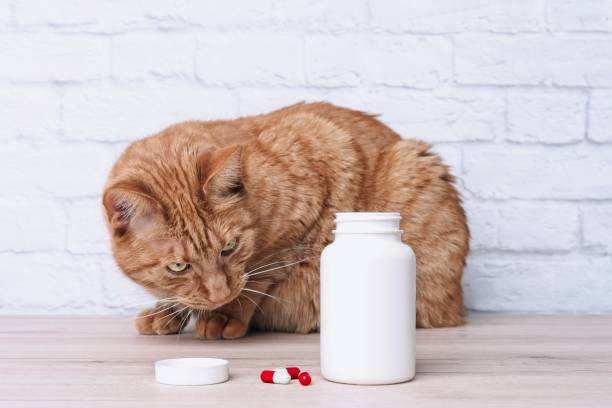 Red cat looking curious to medicine capsules beside a open pill picture id1143472504?b=1&k=6&m=1143472504&s=612x612&w=0&h=bjdd macjtvert633uj8yzqmvpwnws8 f5of25d2j4c=