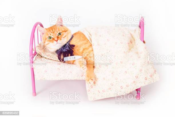 Red cat lying in bed with a thermometer picture id639895432?b=1&k=6&m=639895432&s=612x612&h=fmnvkdkdsl2vf10 tulamfgwmk g5oshenye e7ou64=