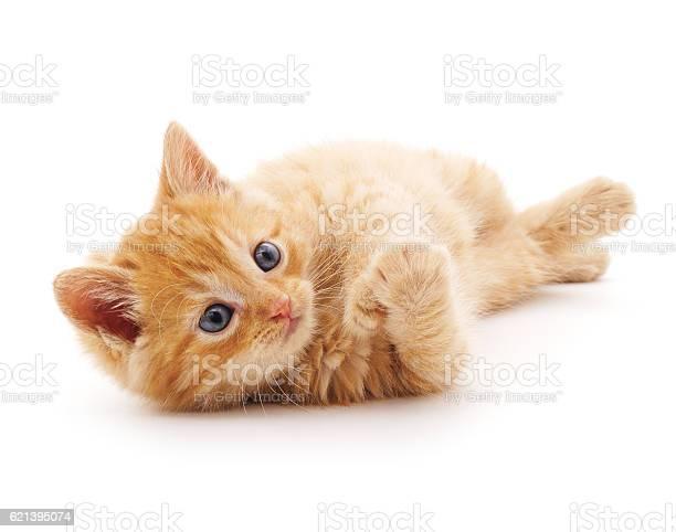 Red cat picture id621395074?b=1&k=6&m=621395074&s=612x612&h=e j1tl7uvnefifmzflhndidhugyyy0wvjt3n gepqzg=