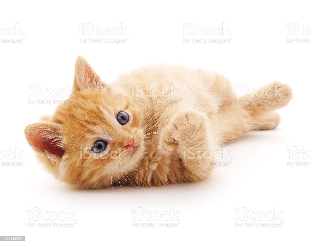Red cat. stock photo