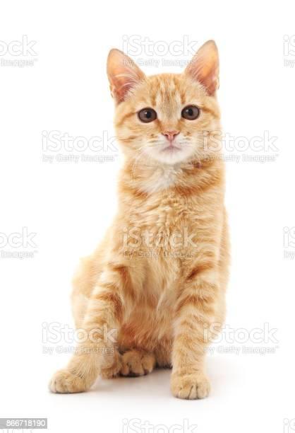 Red cat picture id866718190?b=1&k=6&m=866718190&s=612x612&h=ho5nu8j7k8lpjnnmj5b8fk5hs1wpdvapof9tbcx6l0c=