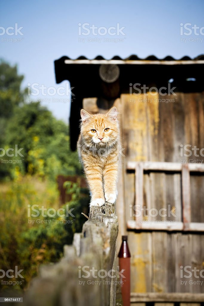 Red cat royalty-free stock photo