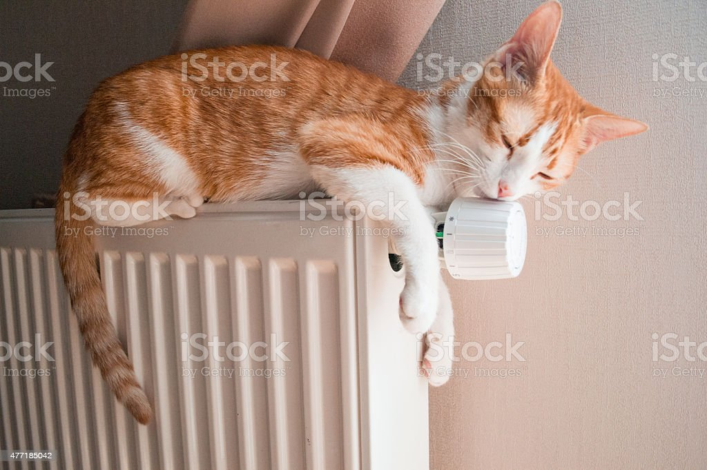 Red cat relaxing on a warm radiator stock photo