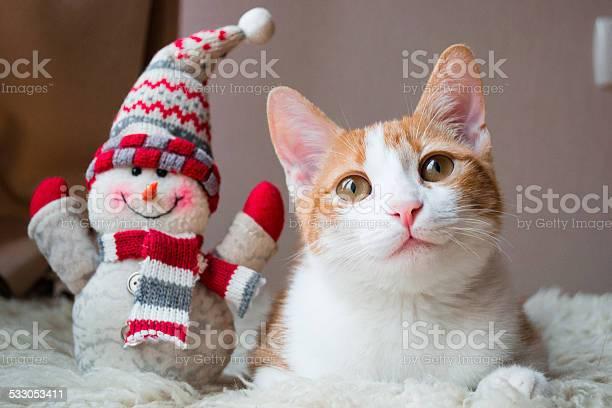 Red cat siting near snowman picture id533053411?b=1&k=6&m=533053411&s=612x612&h=ppunnssoj0nprumjkseapf6pxd6mbrlxzuvdnklhqp0=