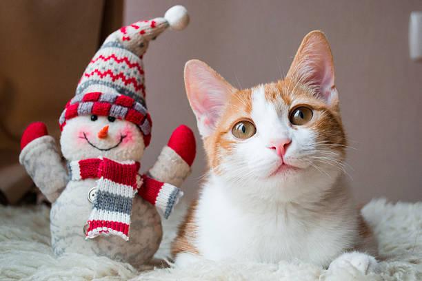 Red cat siting near snowman picture id533053411?b=1&k=6&m=533053411&s=612x612&w=0&h=5tzcilr4bfzubdesker  ut2gczuhzwioo1mlveobkc=