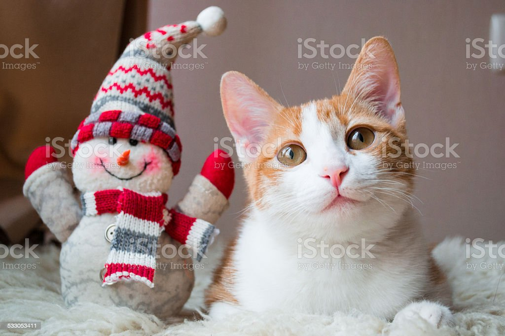 Red cat siting near snowman stock photo