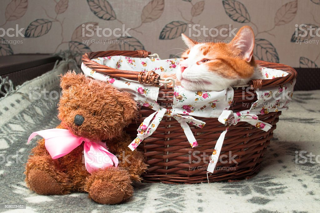 Red cat sitting in a wicker basket with a Teddy Bear stock photo