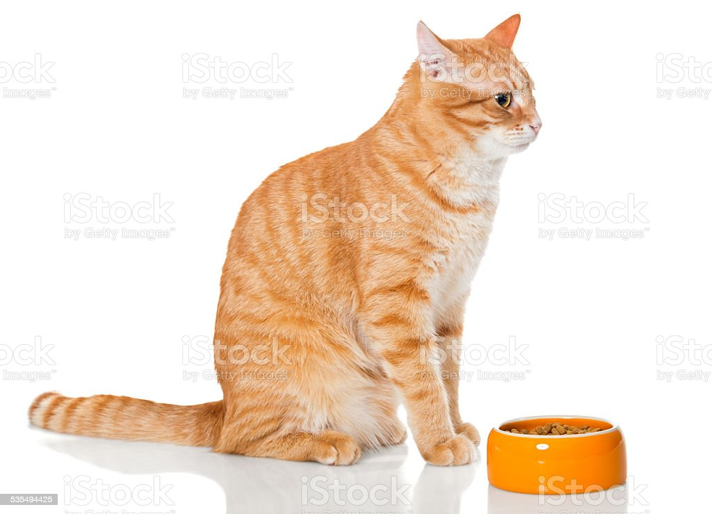 Red cat sitting near the bowl of dry food - Royalty-free 2015 Stock Photo