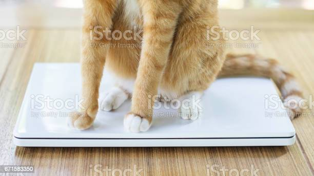 Red cat sitting on a white laptop picture id671583350?b=1&k=6&m=671583350&s=612x612&h=kv5hwqjs6f vvpf0nnhagmg732v4hc1fx uvt xmvvi=