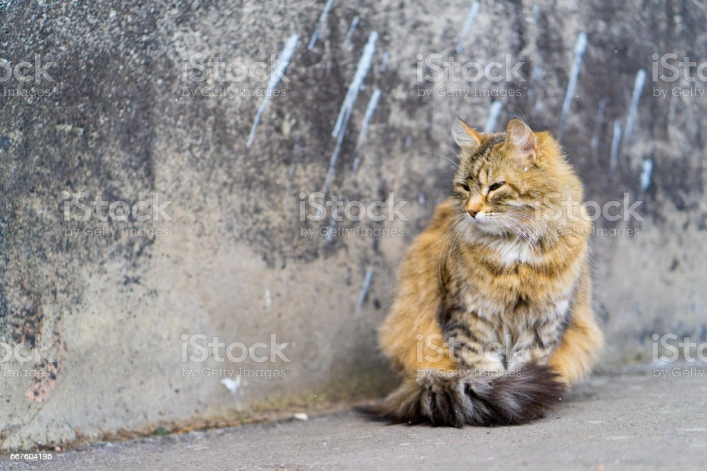 Red cat sitting on the pavement. stock photo