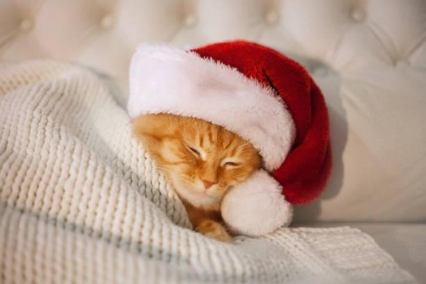 Red cat sleeping in the hat of santa claus picture id1071337826?b=1&k=6&m=1071337826&s=612x612&w=0&h=4fvacezeetf9fcsh3pi33zhcddkclxifdviunvxy6b4=