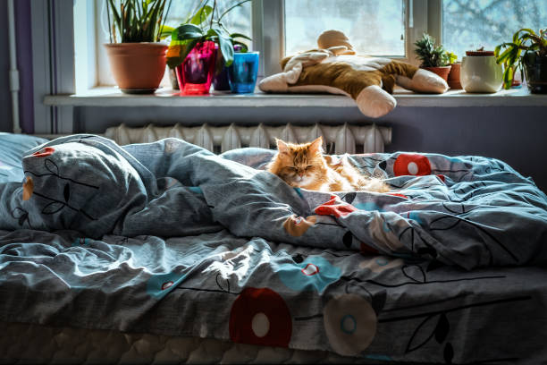 red cat sleeps in bed stock photo