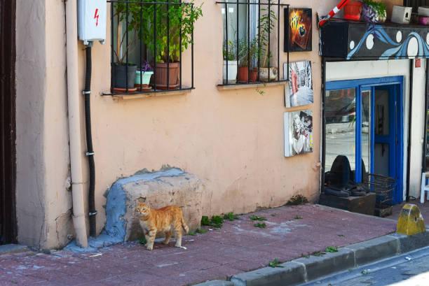 Kırmızı kedi ayakta küçük bir kafeye girişine yakın kaldırımda stok fotoğrafı