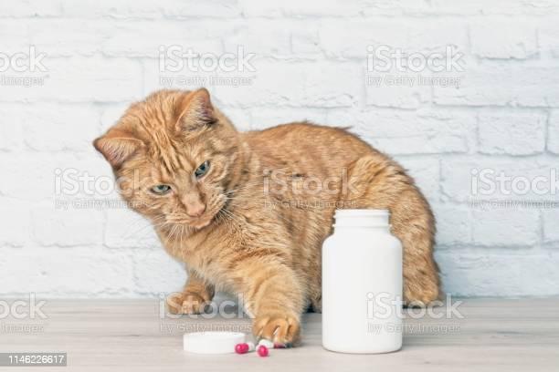 Red cat stealing medicine capsules beside a open pill bottle picture id1146226617?b=1&k=6&m=1146226617&s=612x612&h=twnjgkpcvg8tahgrbjvqmovgicloxbanwbdvcmxl0vu=