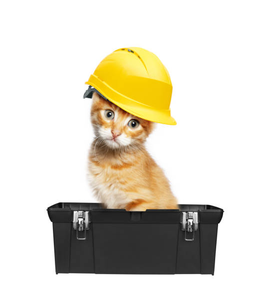 Red cat with helmet in toolbox picture id671414302?b=1&k=6&m=671414302&s=612x612&w=0&h=urlik5zuporvvrjndaiwrscg0bzpph9bpm74eyl mve=