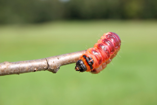 Foto de Red Caterpillar e mais fotos de stock de Amarelo