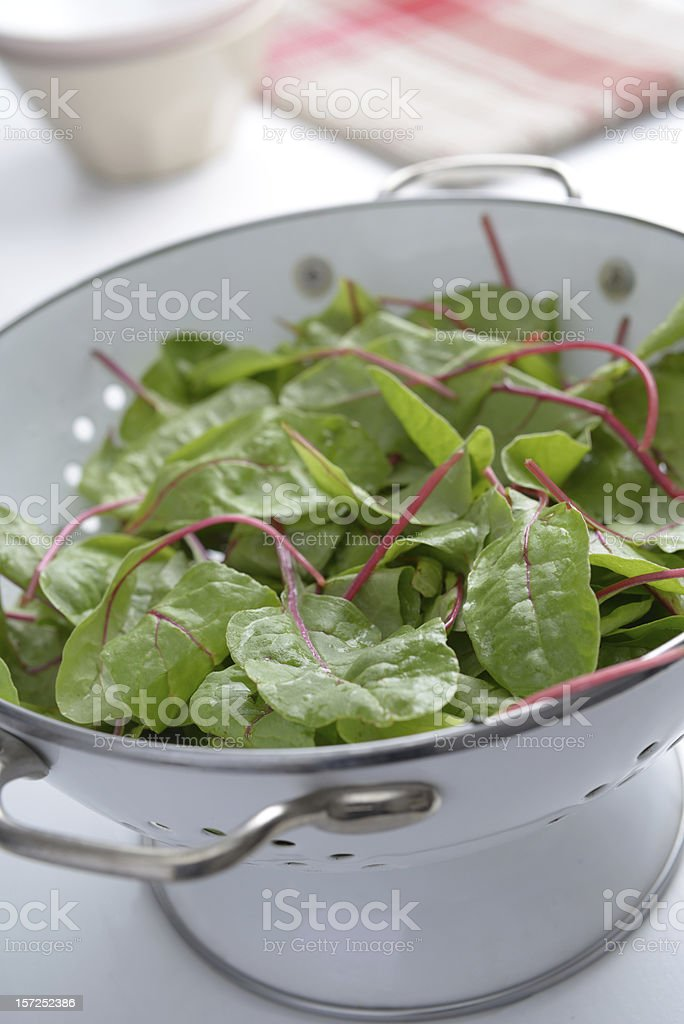 Red chard royalty-free stock photo